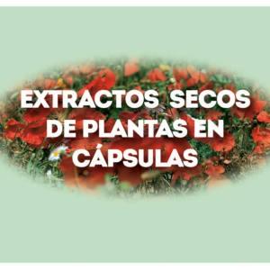 Extractos secos de plantas en capsulas
